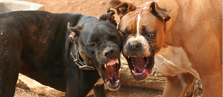 Dog Bites and Injuries