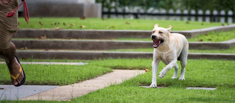 Dog Owner Liability